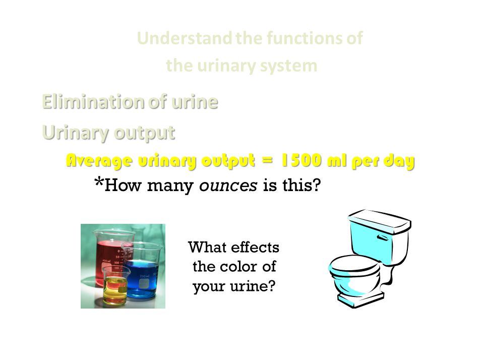 Normal ml of urine for adult the