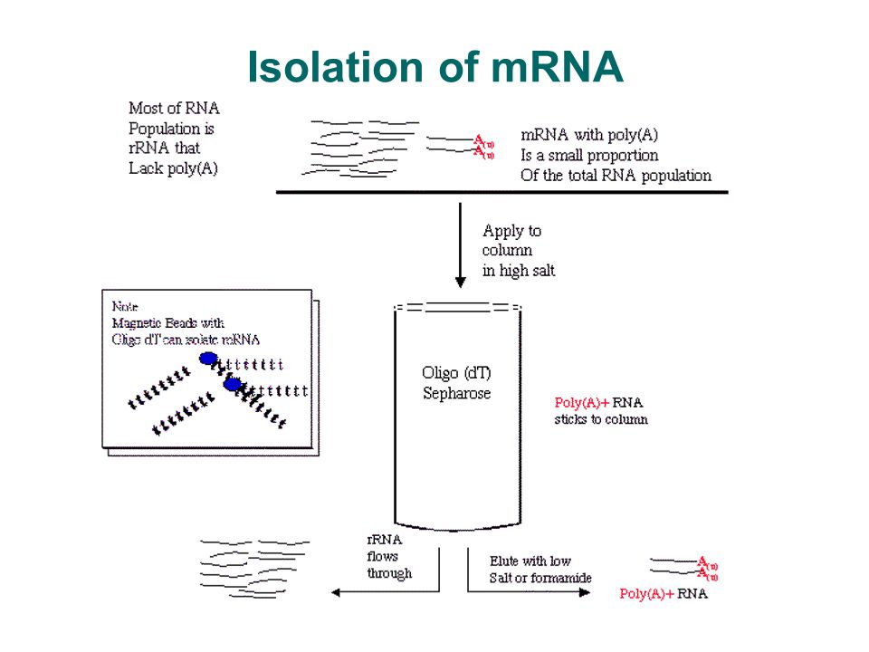 cdna sequencing  sage and microarray analysis