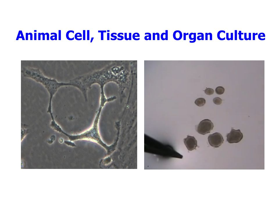 Animal Cell, Tissue and Organ Culture