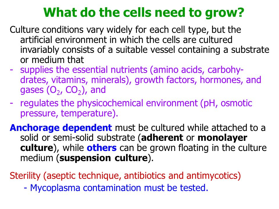 What do the cells need to grow
