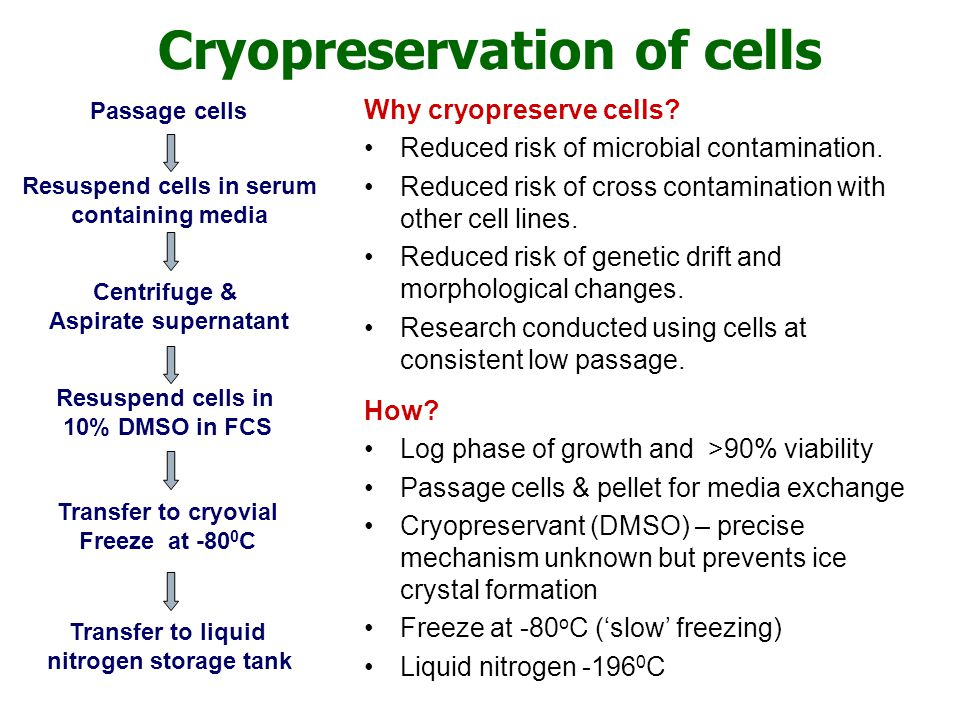 Cryopreservation of cells
