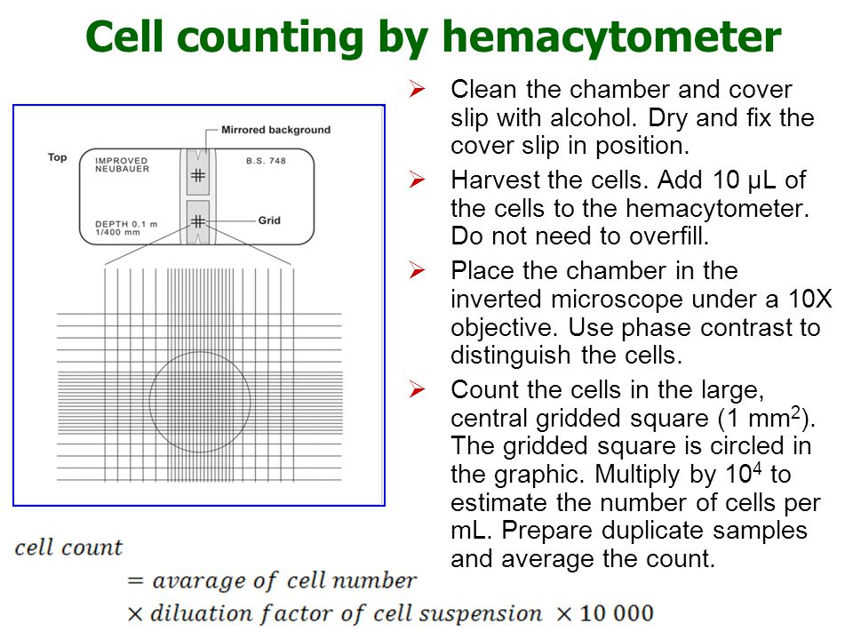 Cell counting by hemacytometer