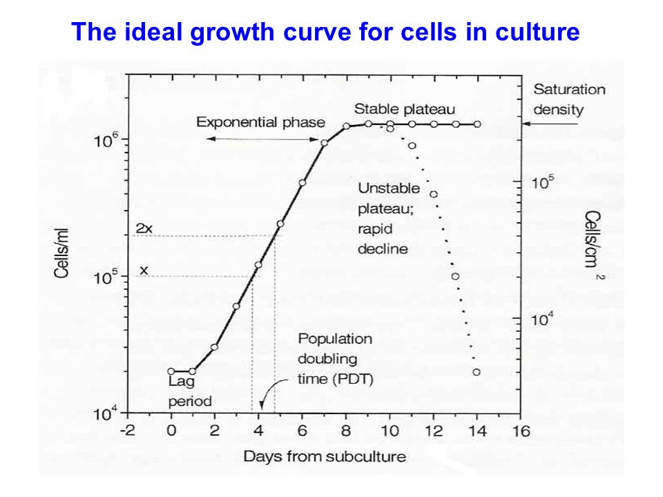 The ideal growth curve for cells in culture