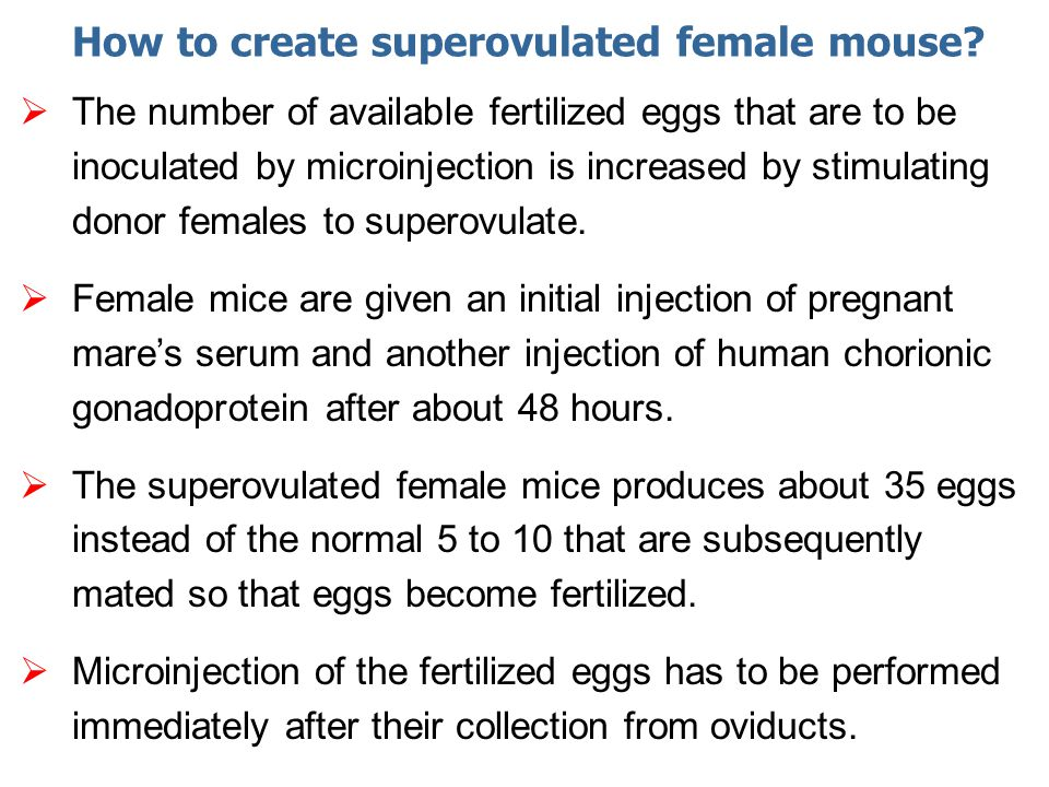 How to create superovulated female mouse