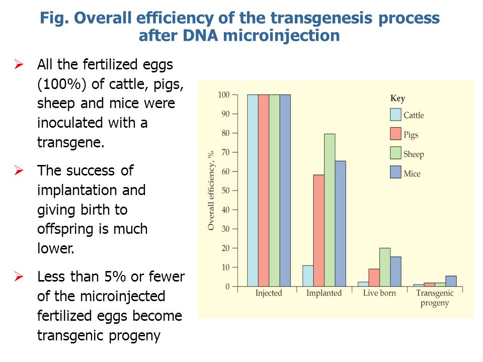 Fig. Overall efficiency of the transgenesis process after DNA microinjection