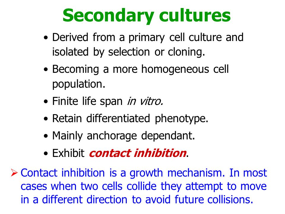 Secondary cultures Derived from a primary cell culture and isolated by selection or cloning. Becoming a more homogeneous cell population.