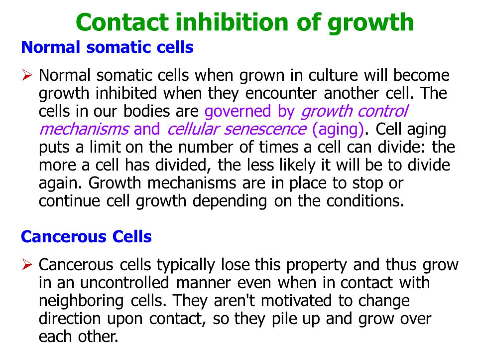 Contact inhibition of growth