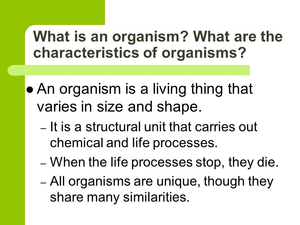 life processes organismal level 4 what processes would you consider essential for maintaining life the processes essential for maintaining life are-a nutrition- it is the process by which living organisms take up nutrients from the.