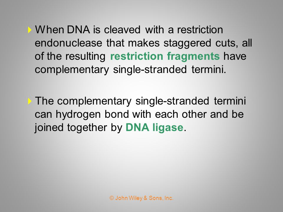 When DNA is cleaved with a restriction endonuclease that makes staggered cuts, all of the resulting restriction fragments have complementary single-stranded termini.