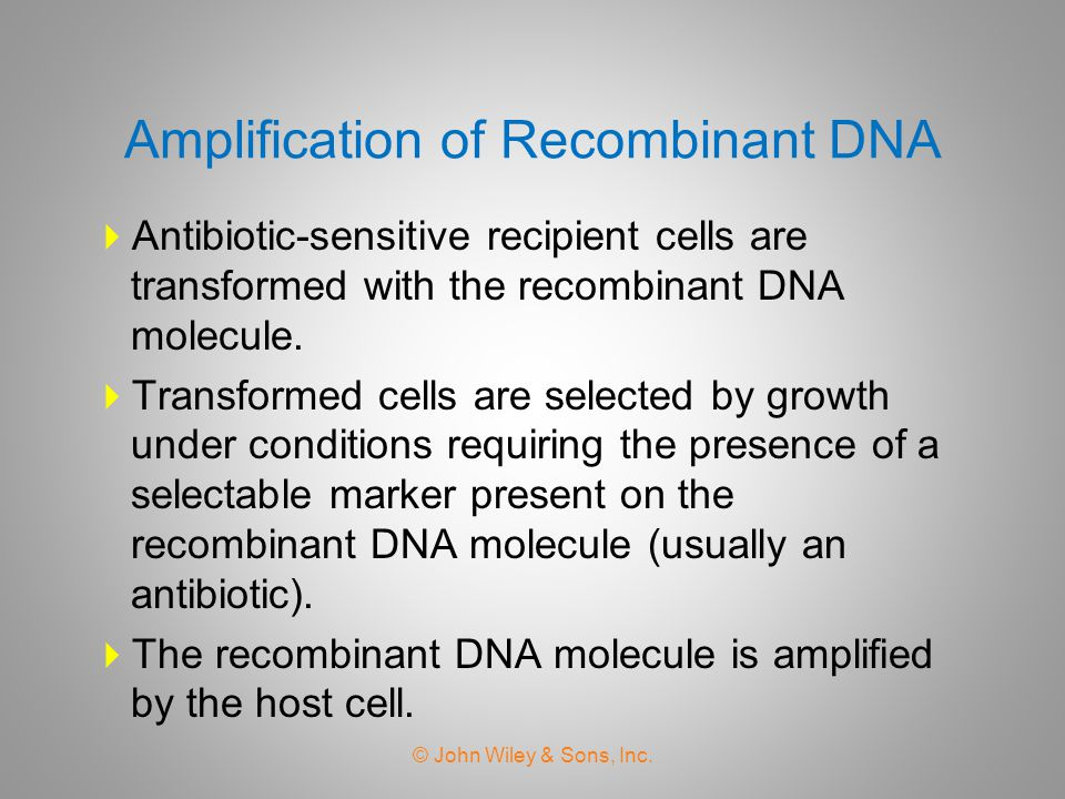 Amplification of Recombinant DNA