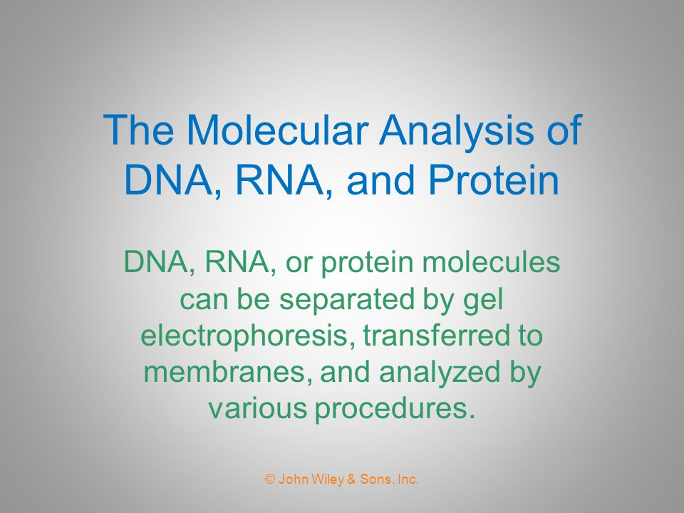 The Molecular Analysis of DNA, RNA, and Protein