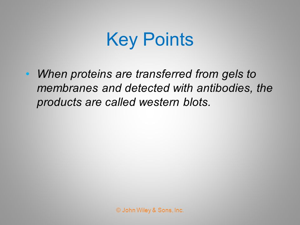 Key Points When proteins are transferred from gels to membranes and detected with antibodies, the products are called western blots.