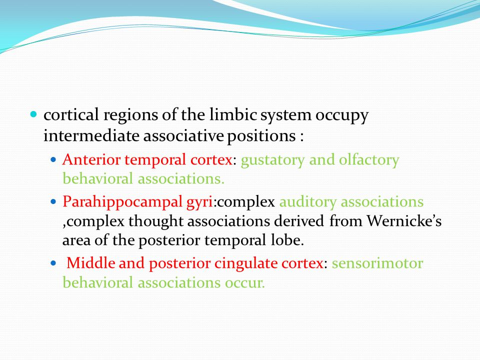 cortical regions of the limbic system occupy intermediate associative positions :