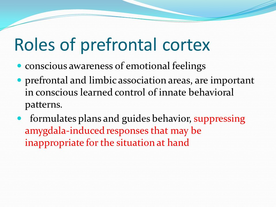 Roles of prefrontal cortex