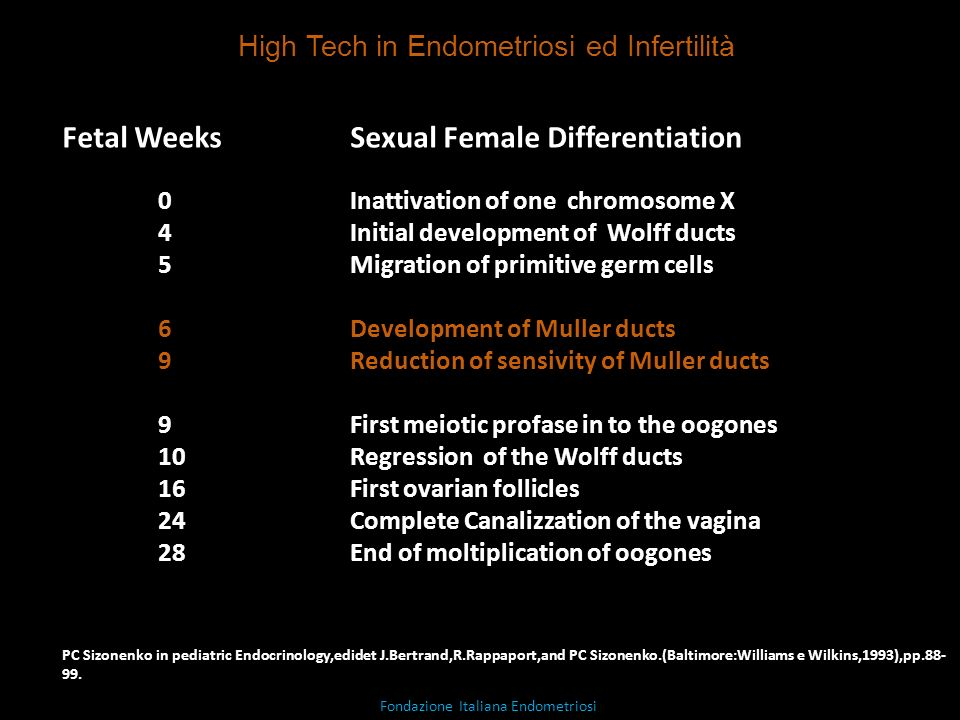 Fetal Weeks Sexual Female Differentiation