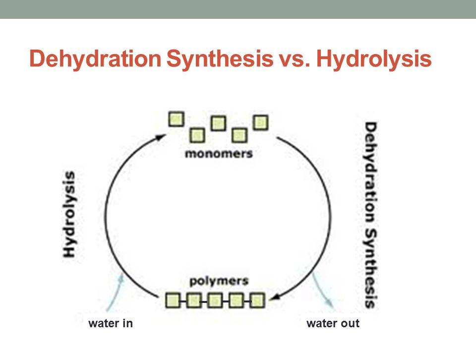 Dehydration Synthesis Example What do the following ...