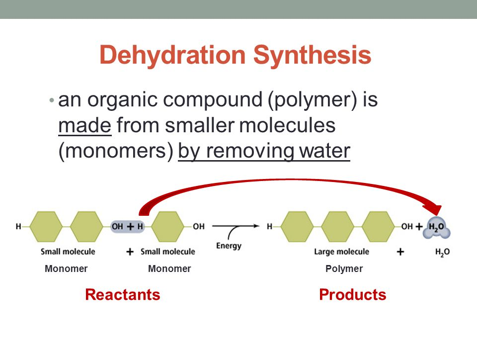 dehydration synthesis example Other examples of dehydration synthesis reactions are the formation of triglycerides from fatty acids and the formation of glycosidic bonds between carbohydrate molecules, such as the formation of.