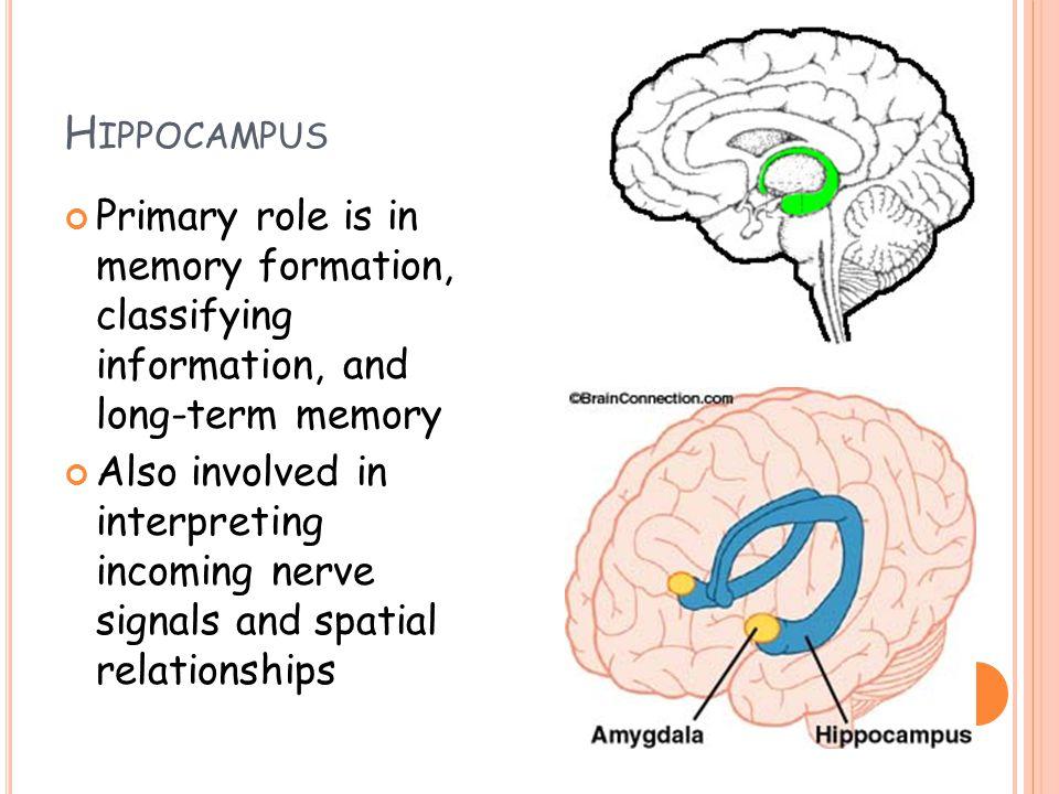 the brain way of healing pdf download