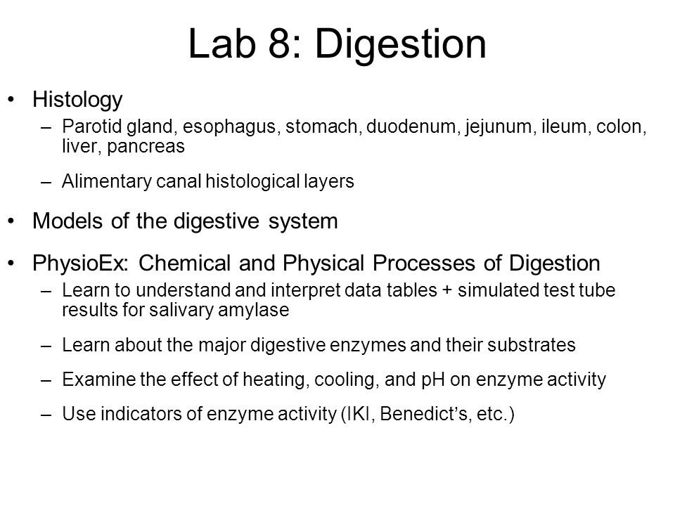 Lab 8 chemical and physical processes of digestion