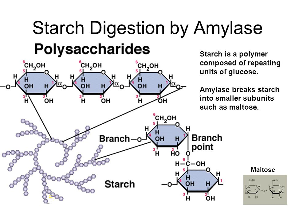 the action of amylase on starch