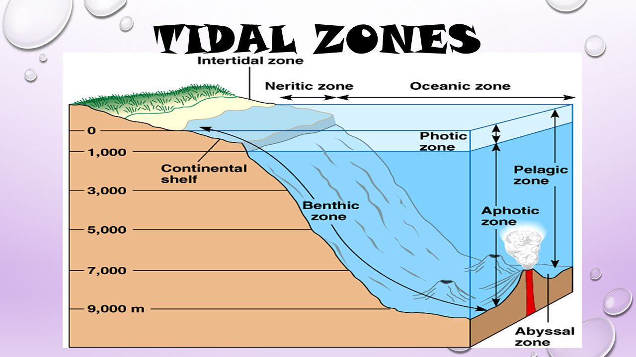 the three zones where surface water masses meet are called
