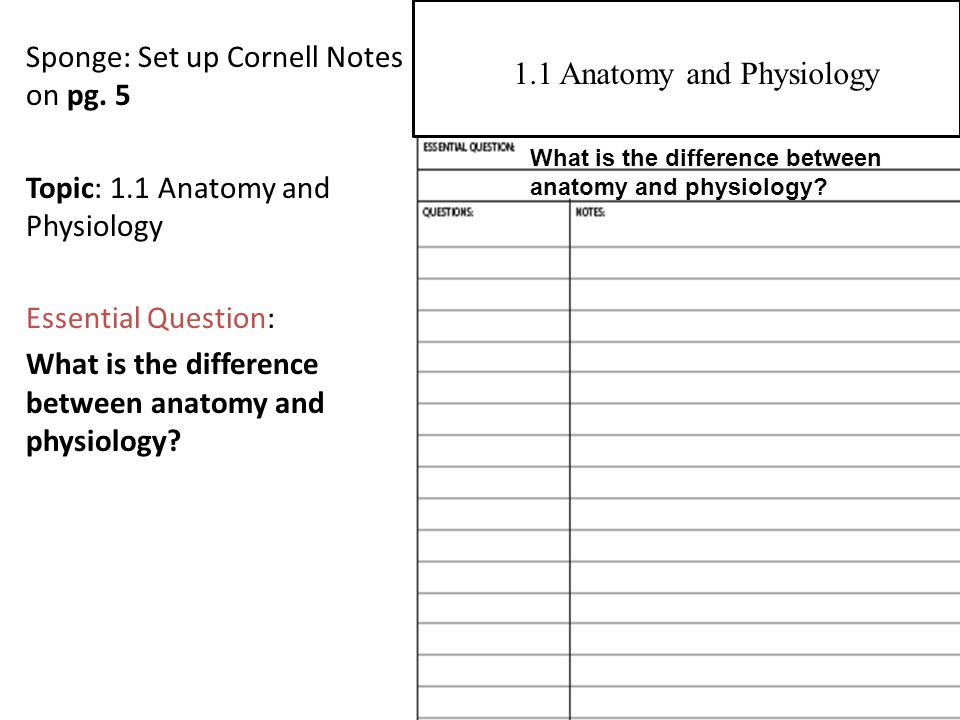 Beste What Is The Difference Between Physiology And Anatomy ...