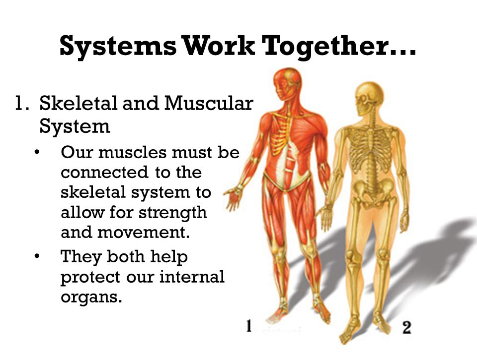 Structures Functions And Interdependence Ppt Video Online Download