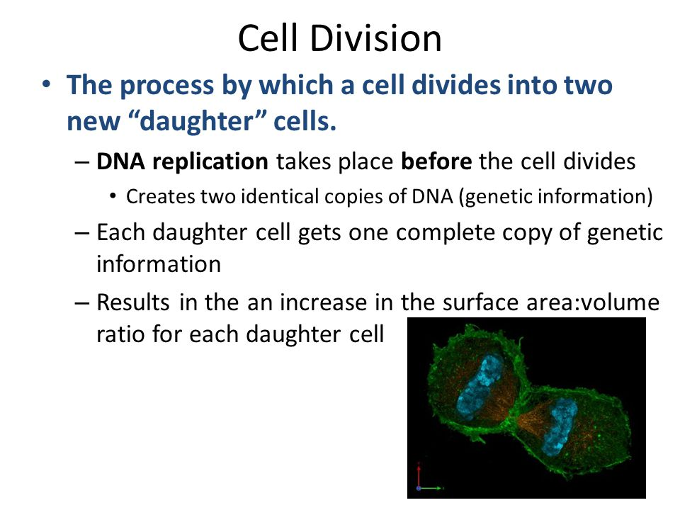 an introduction to the process of organism replication How does the structure of dna provide for the process of replication  the  following: an experimental organism such as e coli an unlimited variety of  isotopes,.