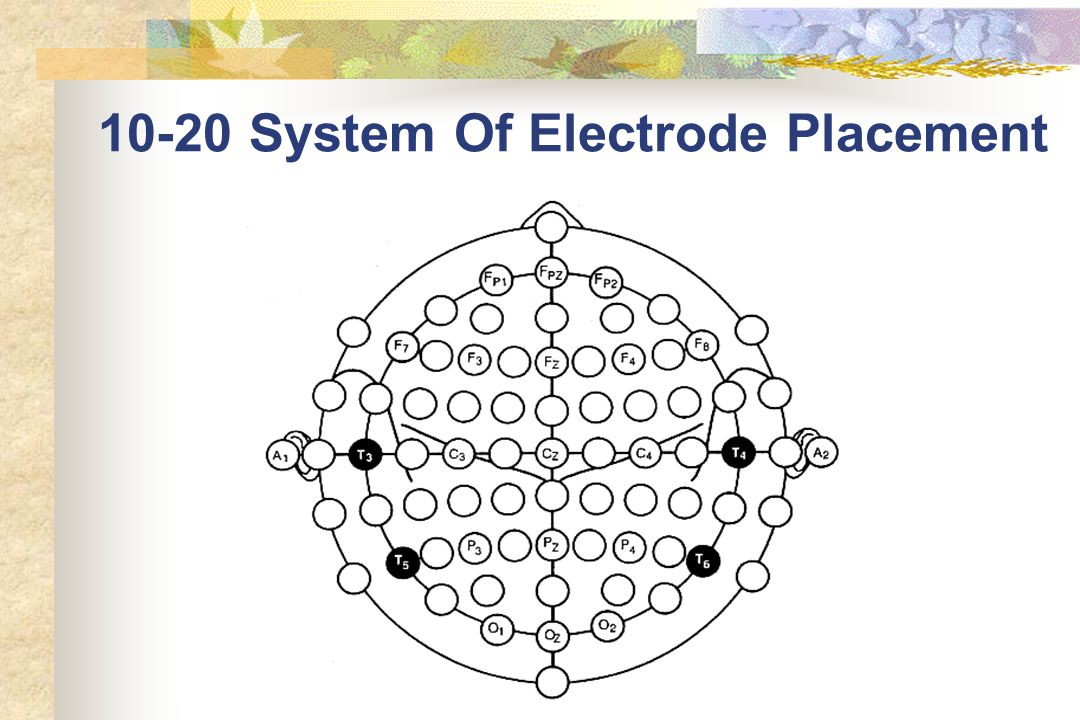 10-20 System Of Electrode Placement
