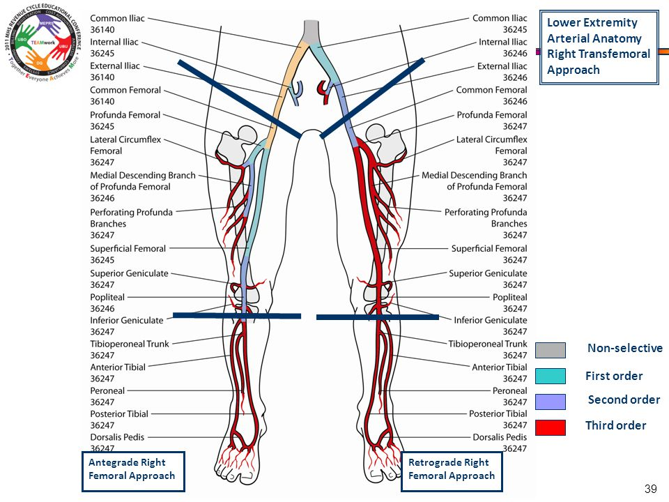 Track x xxx day title cpt coding for cardiac catheterization 39 lower extremity arterial anatomy sciox Image collections