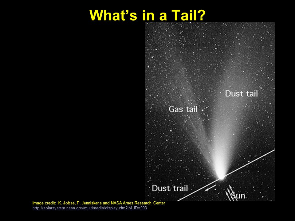 What's in a Tail