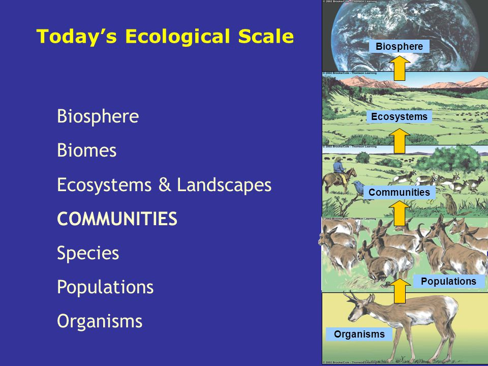 species community and ecosystem Online tutoring archive biology chapter 43: communities and ecosystems: to promote diversity in this fashion is termed a keystone species community.