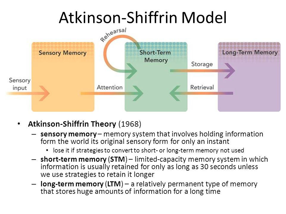 the three information stores of the atkinson model of memory Their model was originally called the two process model, then the three process model, and now more widely known as the multi-store model of memory the model is known as the multi-store model quite simply because it refers to multiple memory stores: sensory memory, short term memory, and long term memory.