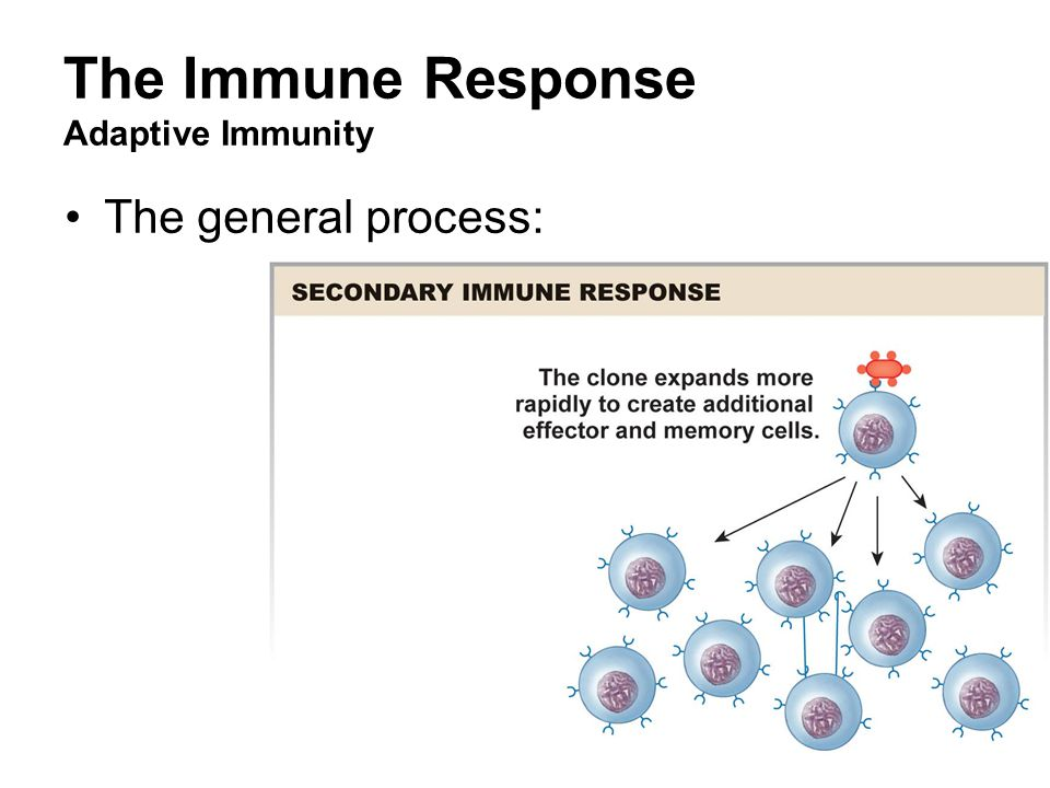 Immune System Function - ppt video online download