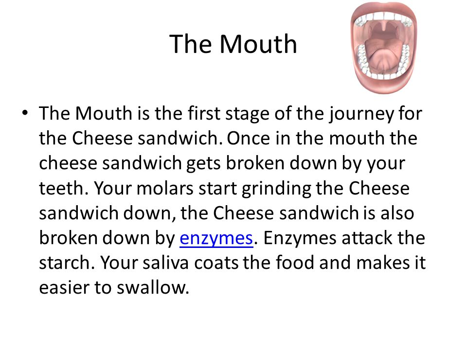 the journey of a cheese sandwich Assessment for learning you must explain the journey of a cheese sandwich through your digestive system yhtli id • a typical homework task • used once for each.