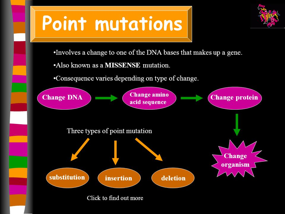 Types Of Point Mutation Diseases Bing Images