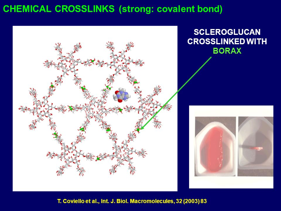 CHEMICAL CROSSLINKS (strong: covalent bond)