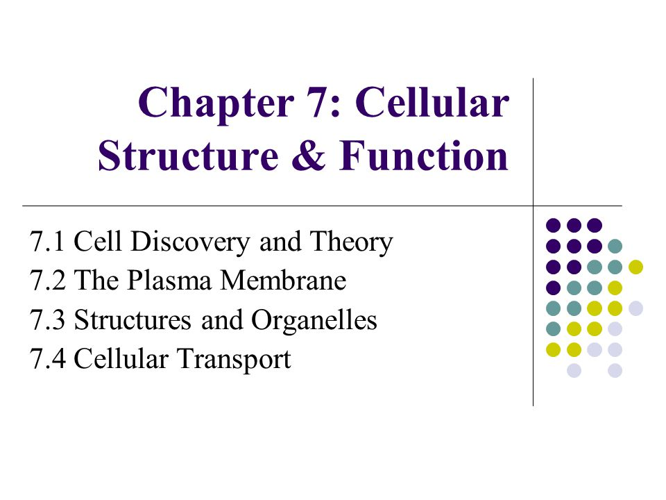 chapter 7 cellular structure function