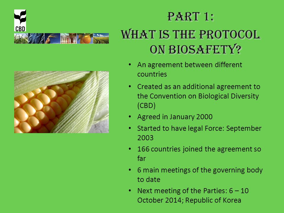 What is the Protocol on Biosafety