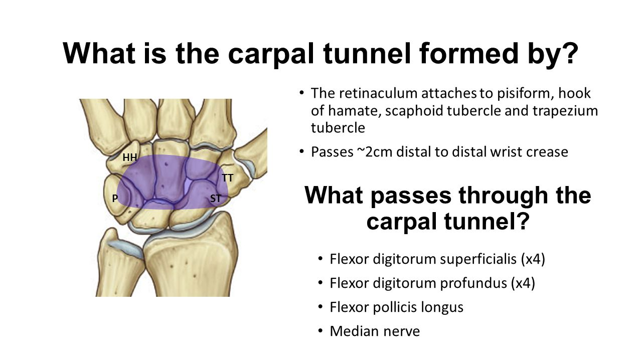 What is the carpal tunnel formed by