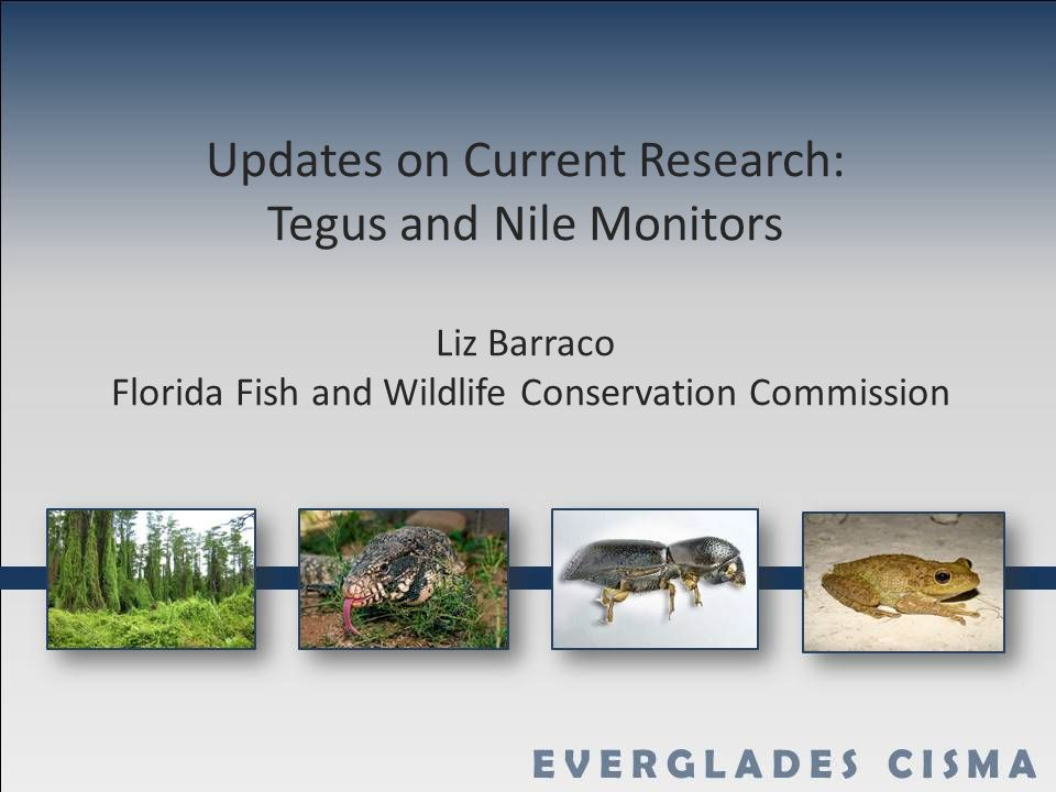 Updates On Current Research Tegus And Nile Monitors Liz