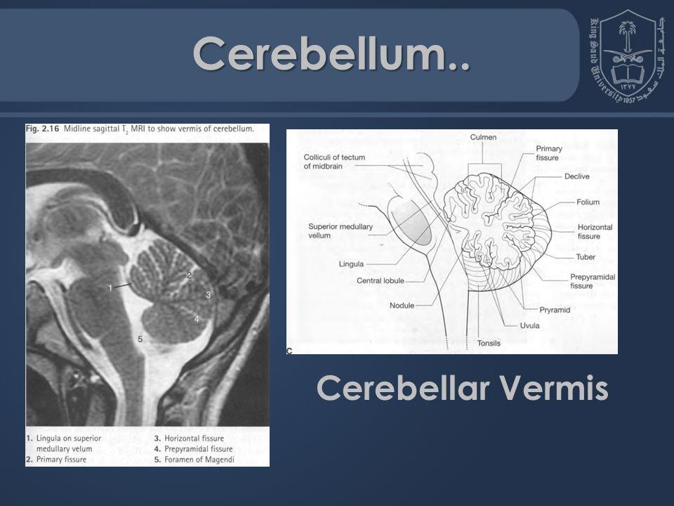 Fantastisch Sagittal Gehirn Mri Anatomie Galerie - Anatomie Ideen ...