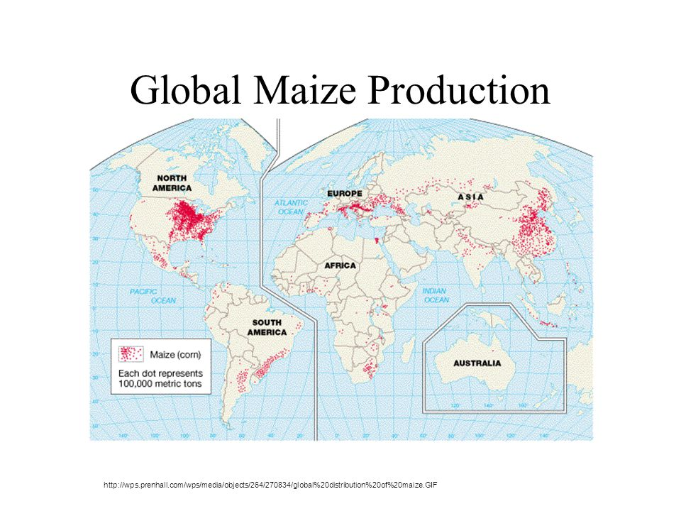Global Maize Production