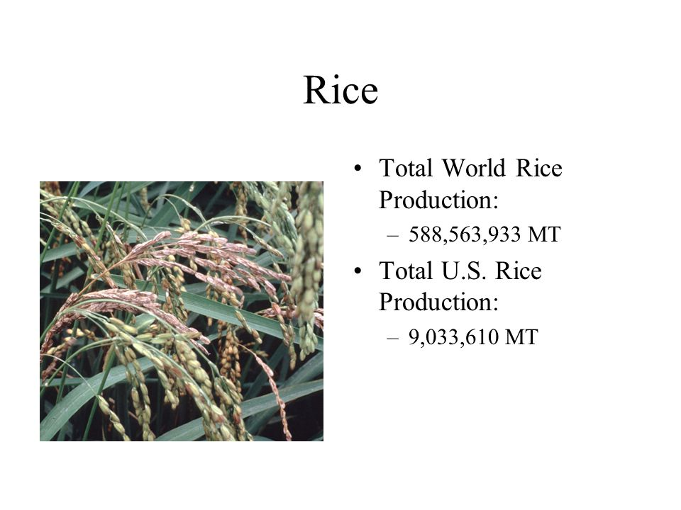 Rice Total World Rice Production: Total U.S. Rice Production: