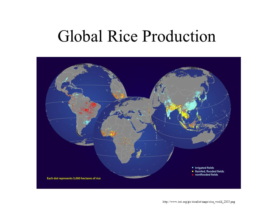 Global Rice Production