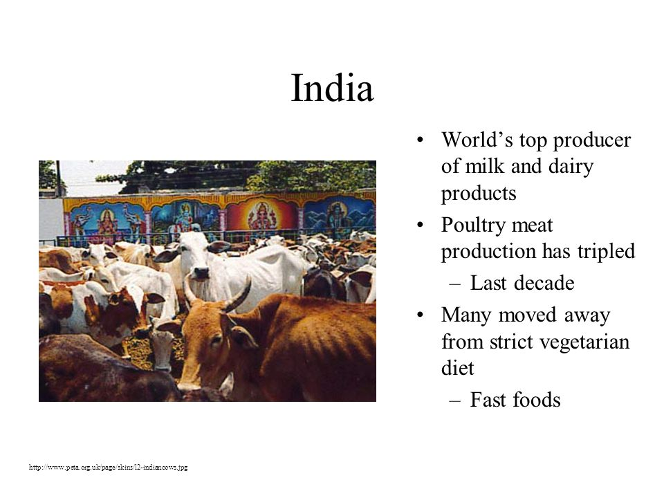 India World's top producer of milk and dairy products