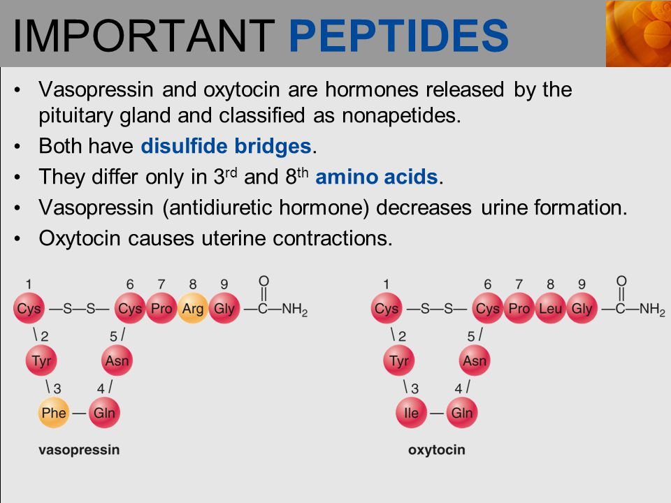 IMPORTANT PEPTIDES Vasopressin and oxytocin are hormones released by the pituitary gland and classified as nonapetides.