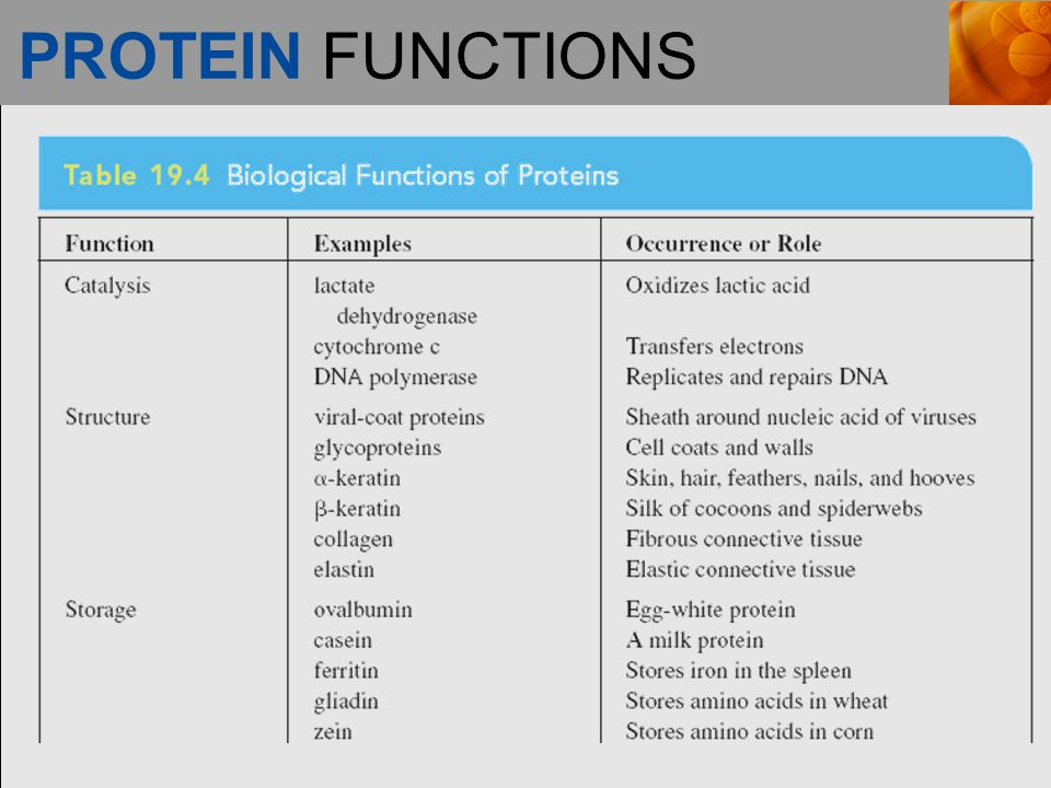 PROTEIN FUNCTIONS