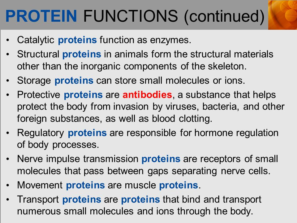 PROTEIN FUNCTIONS (continued)