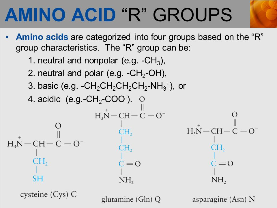 AMINO ACID R GROUPS Amino acids are categorized into four groups based on the R group characteristics. The R group can be: